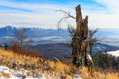 Old tree in mountains Royalty Free Stock Photos