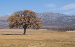 Old tree in Mountains National Park from Romania Stock Photos
