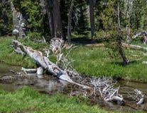 Old Tree on Mt. Lassen Royalty Free Stock Photos