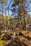Öland Trollskogen Royalty Free Stock Photos