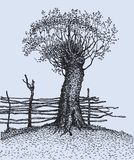 Old tree near the fence Royalty Free Stock Image