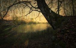 Old tree near lake in autumn Stock Photo