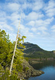 Old tree over clear Lake Stock Photography