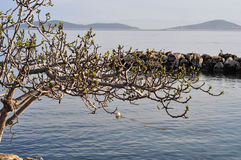 Old Tree Over The Sea Royalty Free Stock Images