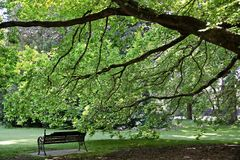 Old tree and park bench. In the Botanic Gardens, Canterbury, South Island,  New Zealand Royalty Free Stock Photography