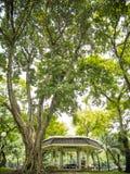 Old tree pavilion Royalty Free Stock Photos