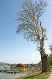 Old tree and pictorial rafts opposite the city on the river Sava in Belgrade. Landscape of rafts and cottages at the river Sava in Belgrade. Rafts are located at Royalty Free Stock Images