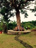 Old tree pose Stock Image