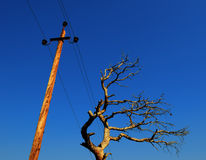Old tree and power line Royalty Free Stock Photography