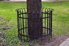 Free Old Tree Protected In Park With Metal Fence Royalty Free Stock Images - 181789369