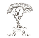 Old tree with ribbon banner hand drawn Stock Images