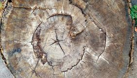 Old tree ring. SECTION OF THE OLD GREAT TREE stock photo