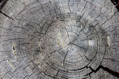 Old tree rings Stock Photos