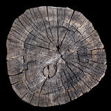 Old tree rings Royalty Free Stock Photography