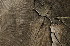 Old tree rings texture Stock Images