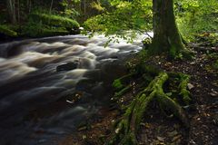 Old tree and river. Scenic view of moss covered roots of old tree by river with slow motion blur Stock Images