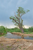 Old tree at the river before a thunder-storm Royalty Free Stock Photography