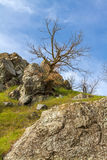 Old_tree_in_the_rocks Royalty-vrije Stock Foto's