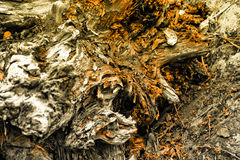 Old tree root. Creative old tree root of in the forest Royalty Free Stock Photos