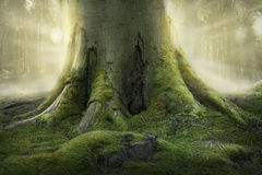 Old Tree Roots Royalty Free Stock Image