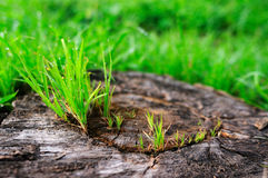 An old tree root Stock Photography