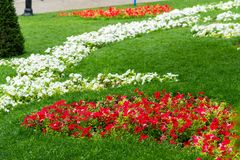 Decoration of the flowerbeds. Old tree roots in the decoration of the flowerbeds in the park royalty free stock image