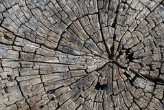Old tree section. Old cracked tree section close up Stock Photos