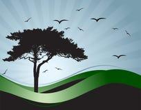 Old tree silhouette, season background Stock Photo