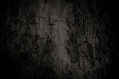 Old tree skin. Tree skin texture black and white vintage color tone style Stock Photography
