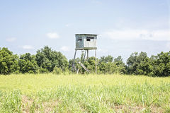 Old Tree Stand Stock Photos