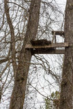 Old Tree Stand in Trees Stock Photography