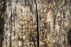 Old tree stem Royalty Free Stock Images