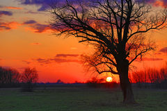 Old tree in steppe on sunset Royalty Free Stock Photo