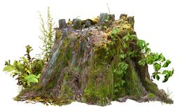 Cut out tree stump. Mossy trunk