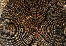 Old tree stump. Wooden surface of a board. Old Tree Stump Stock Photos