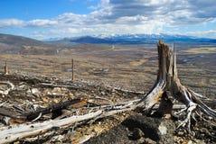 Old tree stump Royalty Free Stock Image