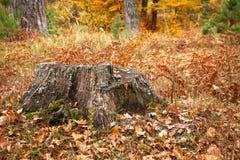 Old tree stump in autumn Stock Photos