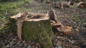 Old tree stump in the autumn park.  stock footage