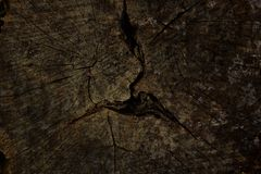 Old tree stump background Stock Photography
