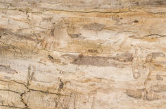 Old tree stump background,weathered wood texture with the cross section of a cut log.  Royalty Free Stock Photos
