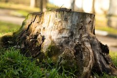 Old tree stump Stock Images