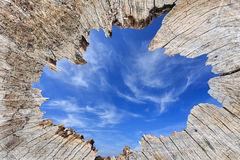 Old tree stump and blue sky on middle part Royalty Free Stock Photography