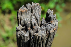 Old tree stump with cracks and decay Royalty Free Stock Photos