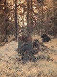Old tree stump and forest Stock Photography