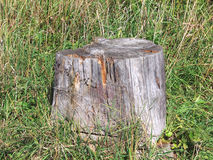 Old tree stump Stock Image