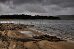 Old tree stump on lake´s sandy beach Stock Photos