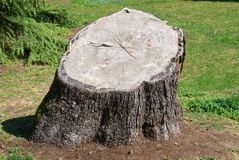 Old tree stump Stock Photo