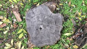 Old tree stump in a park. View from above stock video footage