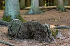 Old tree stump Royalty Free Stock Photos