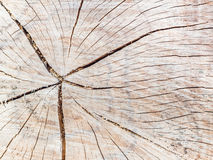 An old tree stump shows cracks Royalty Free Stock Images